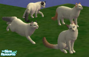 Sims 2 — Turkish Van by macanderson — The Turkish Van is a recognized cat breed that is known for its unusual love of