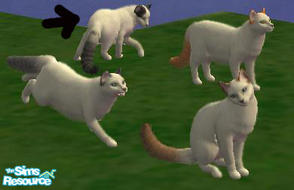 Sims 2 — Turkish van black by macanderson — The Turkish Van is a recognized cat breed that is known for its unusual love