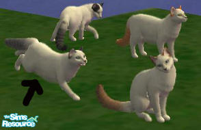 Sims 2 — Turkish van grey by macanderson — The Turkish Van is a recognized cat breed that is known for its unusual love
