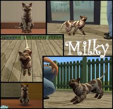 Sims 2 — Milky by allison731 — Milky is a sweet cat who loves to laze in the comfort of home. His personality is: genius,