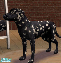 Sims 2 — Black Dalmatian by SilantWanderer — The Black Dalmatian looks very similar to its cousin, with exception to the