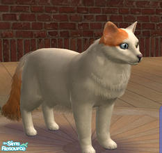 Sims 2 — Turkish Van by SilantWanderer — The Turkish Van is a breed native to the middle east. It has a broad chest and