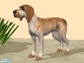 Sims 2 — Bracco Italiano by Wolf91 — This breed comes from Italy. It is good with children and other dogs and requires
