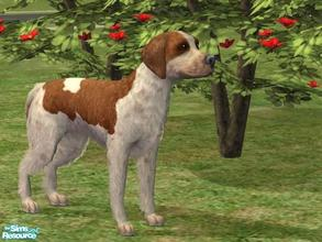 Sims 2 — Brittany Spaniel by Wolf91 — This breed comes from France, is good with children and other dogs, easy to