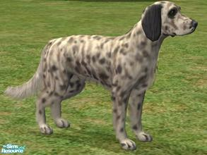 Sims 2 — English Setter by Wolf91 — An elegant breed from England, the English Setter gets on well with children and dogs