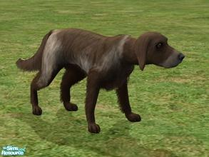 Sims 2 — German Long Haired Pointer by Wolf91 — This breed comes from Germany, it is the long haired variety of German