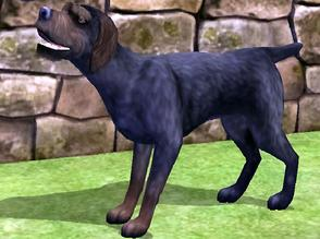 Sims 2 — German Wired Haired Pointer by Wolf91 — The wire haired variety of German Pointer.