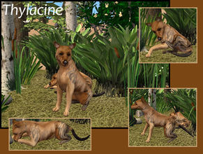 Sims 2 — Thylacine by laivine_erunyauve — It is said that somewhere deep in the Tasmanian wilderness the Thylacine still