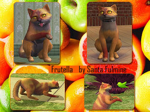 Sims 2 — Frutella by Santa_Fulmine — Just a nice cat of orange color. :)