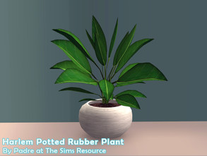 Sims 2 — Harlem II - Potted Rubber Plant by Padre — More Mid Century style items for your cool mid-century sims