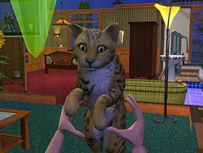 Sims 2 — Leopard Cat by animal_sim — Color: Yellow, Black and White