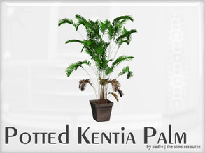 Sims 2 — Potted Kentia Palm by Padre — Potted Kentia palm tree for The Sims 2. This has quite a high-poly count for a