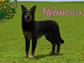 Sims 3 — Minnow Dog by MissMoonshadow — Meet Minnow, a beautiful female Australian Cattle dog. She is extremely sweet and
