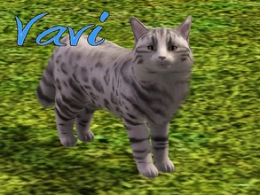 Sims 3 — Vavi Cat by MissMoonshadow — Meet Vavi, a handsome male lavender-colored cat. He, like many kitties, is
