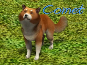 Sims 3 — Comet Dog by MissMoonshadow — Meet Comet, a handsome male Shetland Sheepdog mix. He's not just any Sheltie mix