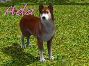 Sims 3 — Ada Dog by MissMoonshadow — Meet Ada, a beautiful female red and white Siberian Husky. She is one of the