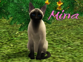 Sims 3 — Mina Cat by MissMoonshadow — Meet Mina, a beautiful female Siamese cat. She usually doesn't make much noise,