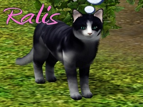 Sims 3 — Ralis Cat by MissMoonshadow — Meet Ralis, a beautiful female dark blue and white cat. She is the boss, and don't