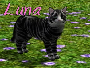 Sims 3 — Luna Cat by MissMoonshadow — Meet Luna, a beautiful female black and gray striped cat. She is one of the