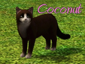 Sims 3 — Coconut Cat by MissMoonshadow — Meet Coconut, a beautiful female dark brown and white cat. She is one of the