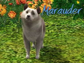 Sims 3 — Marauder Dog by MissMoonshadow — Meet Marauder, a handsome male Shetland Sheepdog mix. He's not just any Sheltie