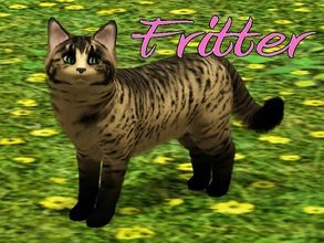 Sims 3 — Fritter Cat by MissMoonshadow — Meet Fritter, a beautiful female yellow and black cat. She, like many kitties,