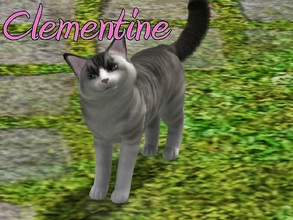 Sims 3 — Clementine Cat by MissMoonshadow — Meet Clementine, a beautiful female gray and white cat. She, like many