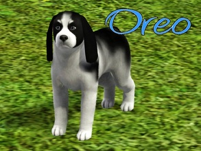 Sims 3 — Oreo Dog by MissMoonshadow — Meet Oreo, a handsome male black and white mini Cocker Spaniel. He is very smart,