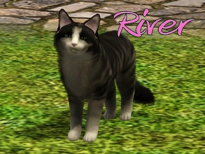 Sims 3 — River Cat by MissMoonshadow — Meet River, a beautiful female black and beige Maine Coon cat. She is one of the
