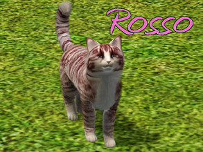 Sims 3 — Rosso Cat by MissMoonshadow — Meet Rosso, a beautiful female cream and red striped cat. She is the sweetest,